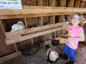 children collect eggs at Rocky Acre Farm Bed & Breakfast